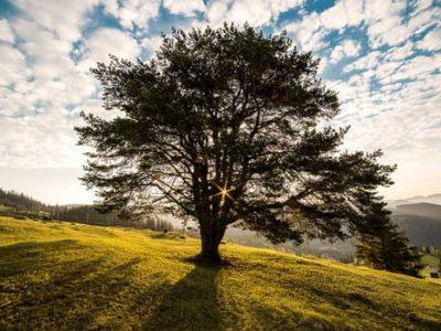 Ambitie, de bomen en het bos